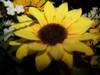 4thofjuly2006_103